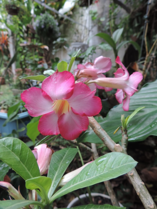 Resultado de imagem para flores numa tarde calma